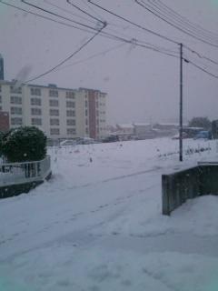 今日も雪でした
